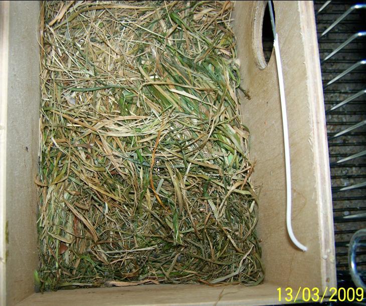 erba del giardino come materiale da nido Giardi17