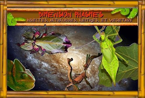 Dimension phasmes et insectes