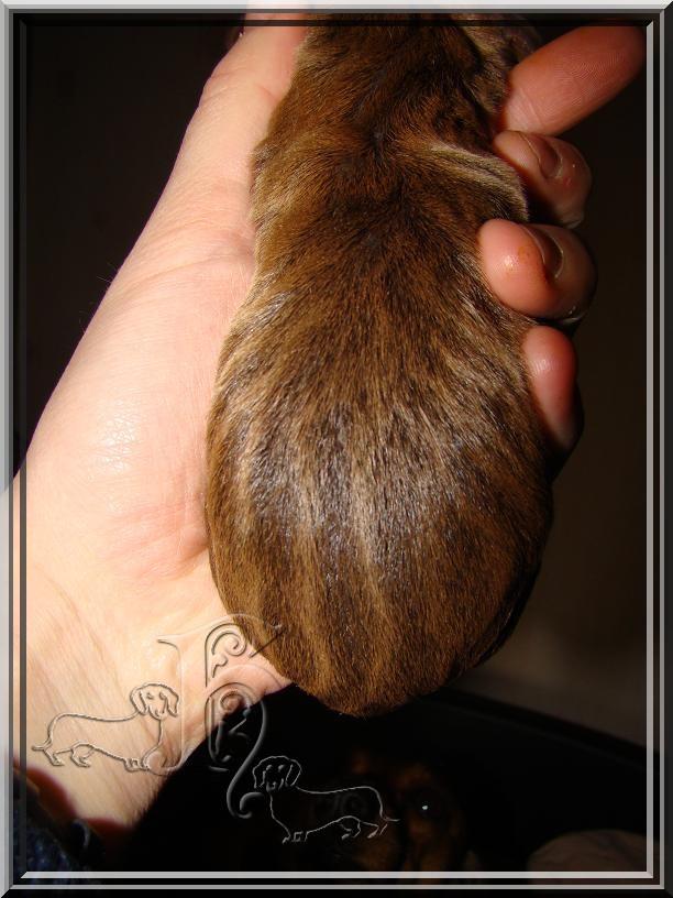 Souvenez vous du ptit teckel écureuil ... 118