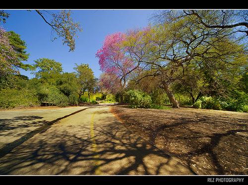 Travel in Los Angeles - Spring Season Park10