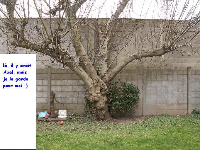le jardinet de Mapy - Page 2 1er_ma16