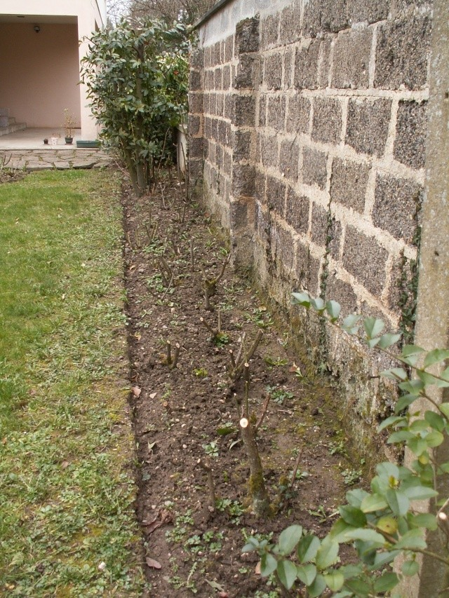 le jardinet de Mapy - Page 2 1er_ma17