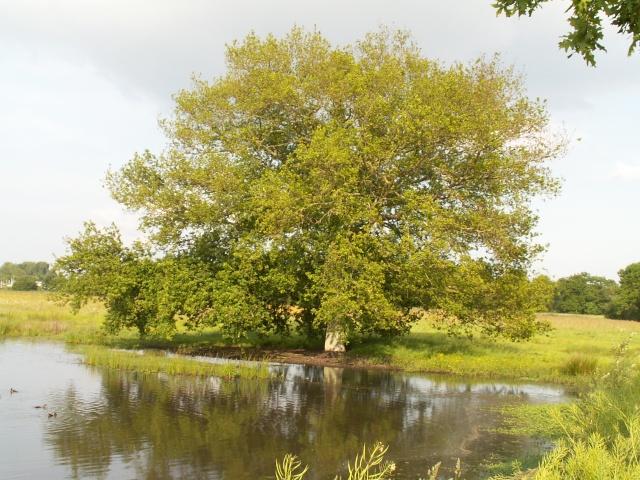 Les étangs d'Apigné Mai_2026