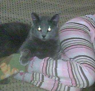 Rocco y Luna 146