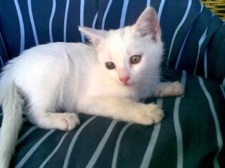 Adoptada la gatita blanca 158