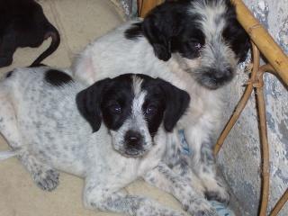 Cinco cachorros de perro necesitan hogar. ADOPTADOS. Pelusa10