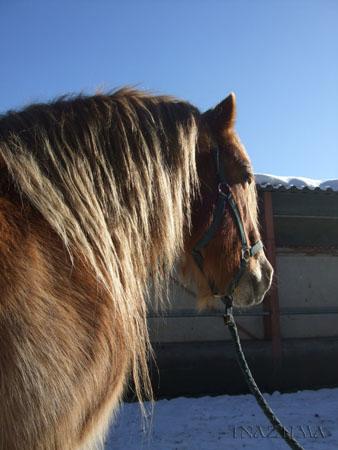 Le cheval et la neige, gagnant : Chris - Page 3 Dscf4211