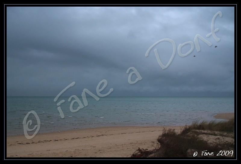 Dunes et Marais A Donf !!! - Page 4 Dscf5724
