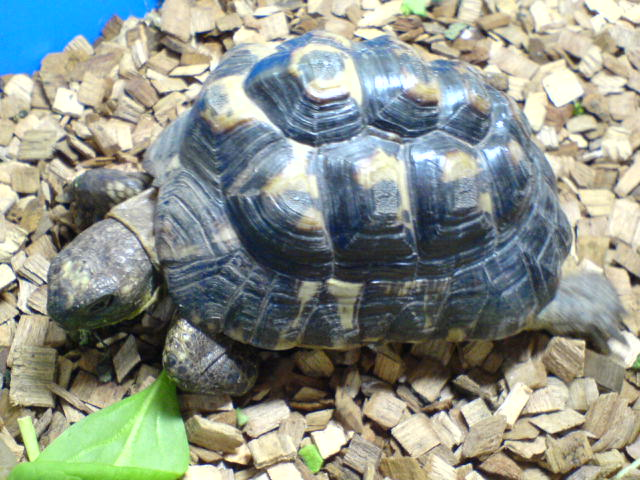Vote concours animaux octobre 2009 02810