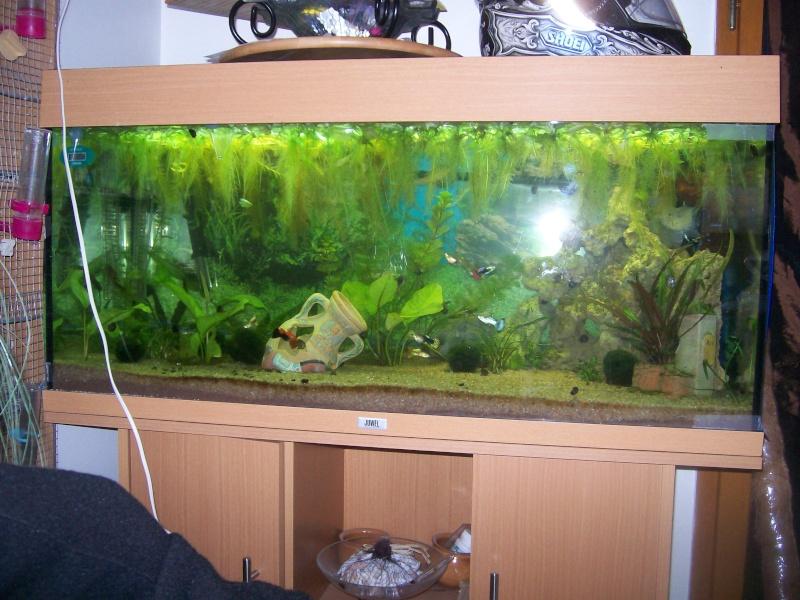 aquarium 180l, 39l crevette, 20l repro, 17l crevette, 12l combattabt, et 30l red cherry (diablotin) 101_0718