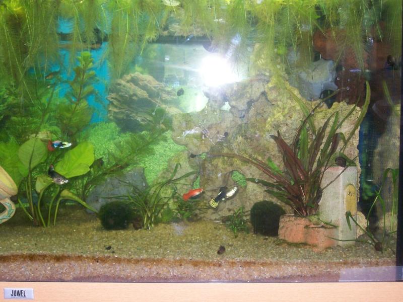 aquarium 180l, 39l crevette, 20l repro, 17l crevette, 12l combattabt, et 30l red cherry (diablotin) 101_0721