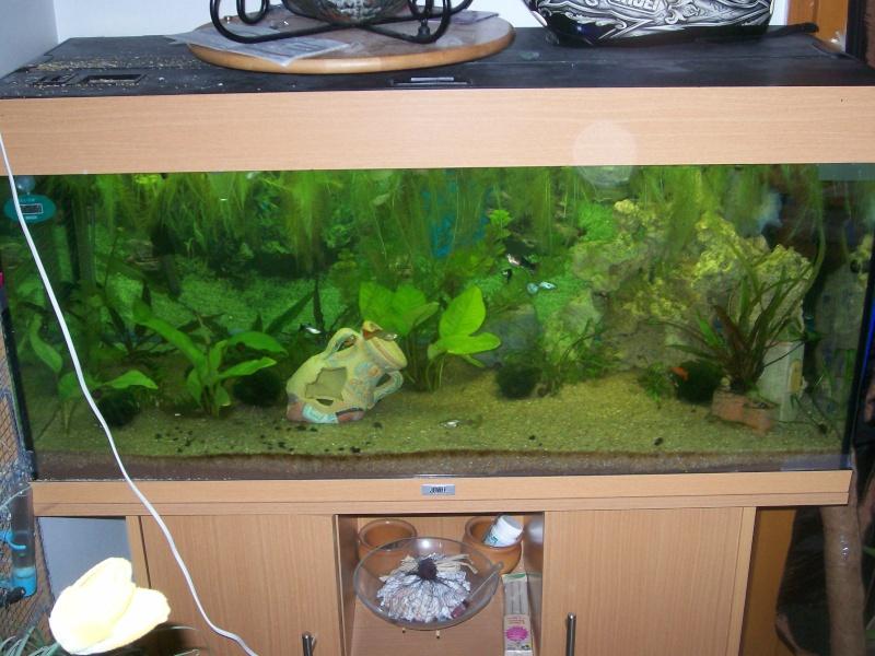 aquarium 180l, 39l crevette, 20l repro, 17l crevette, 12l combattabt, et 30l red cherry (diablotin) 101_0722