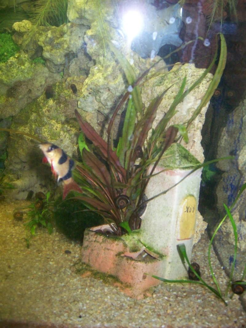 aquarium 180l, 39l crevette, 20l repro, 17l crevette, 12l combattabt, et 30l red cherry (diablotin) Plante12