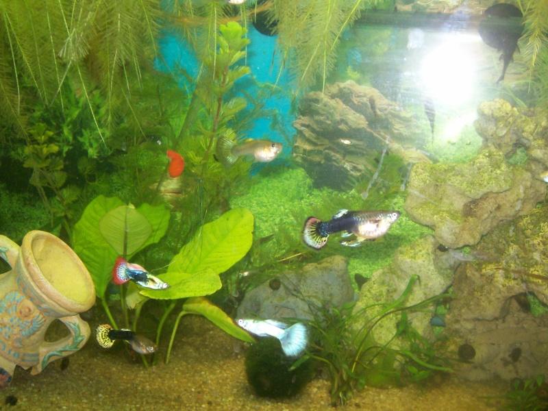 aquarium 180l, 39l crevette, 20l repro, 17l crevette, 12l combattabt, et 30l red cherry (diablotin) Plante18
