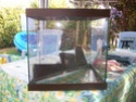 aquarium 180l, 39l crevette, 20l repro, 17l crevette, 12l combattabt, et 30l red cherry (diablotin) 42424211