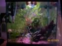 aquarium 180l, 39l crevette, 20l repro, 17l crevette, 12l combattabt, et 30l red cherry (diablotin) 64l_110
