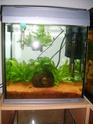 aquarium 180l, 39l crevette, 20l repro, 17l crevette, 12l combattabt, et 30l red cherry (diablotin) Bac_cr11