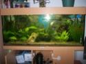 aquarium 180l, 39l crevette, 20l repro, 17l crevette, 12l combattabt, et 30l red cherry (diablotin) New_1810
