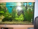aquarium 180l, 39l crevette, 20l repro, 17l crevette, 12l combattabt, et 30l red cherry (diablotin) New_1811