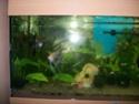 aquarium 180l, 39l crevette, 20l repro, 17l crevette, 12l combattabt, et 30l red cherry (diablotin) New_1812