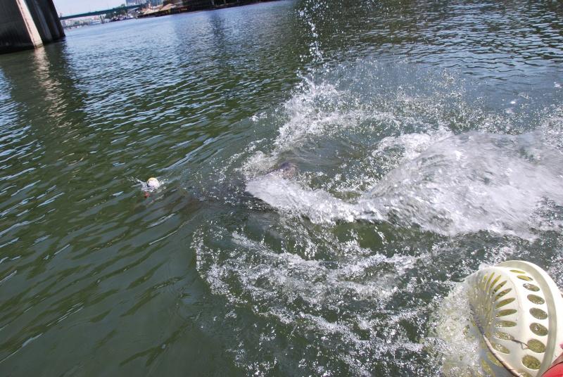 Découverte de la pêche du glane en dérive avec Franky Dsc_0112