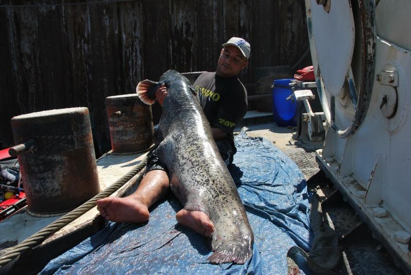 Découverte de la pêche du glane en dérive avec Franky Dsc_0114
