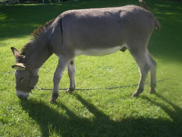 Le compagnonnage LO/cheval Doudou12