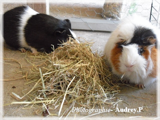 Album photos de Audrey-0903 0611