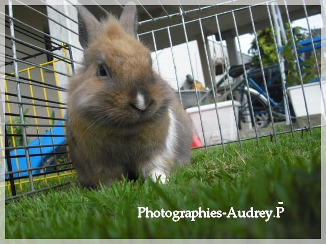 Album photos de Audrey-0903 1310