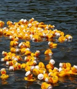 La grande course aux canards 2009 bat un record du monde 25111310