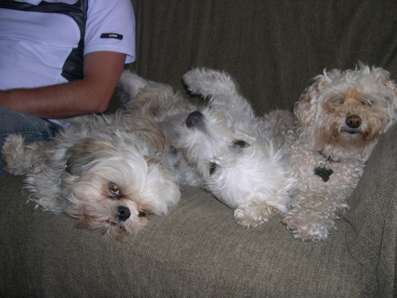 DOLLY, le retour (30 juin 2009) Dscn9810