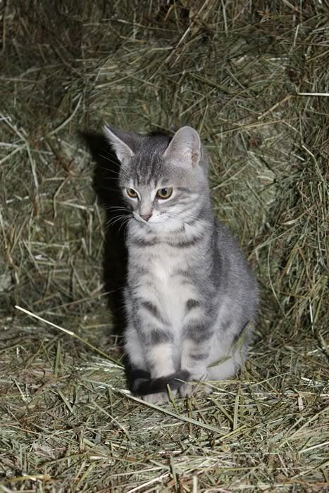 3 chatons mâles a l'adoption Img_1610