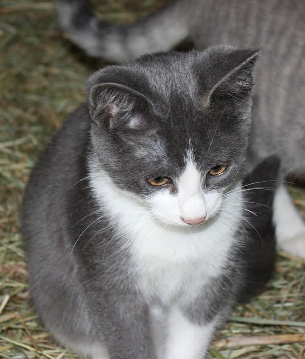 3 chatons mâles a l'adoption Img_1611