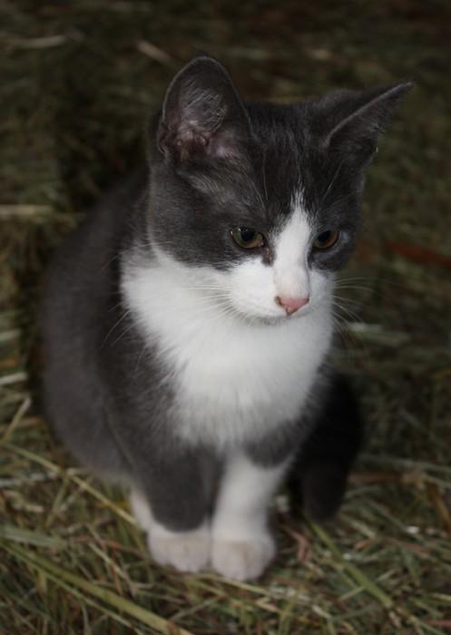 3 chatons mâles a l'adoption Img_1612