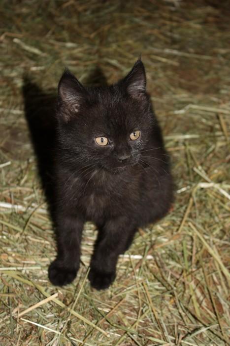 3 chatons mâles a l'adoption Img_1613