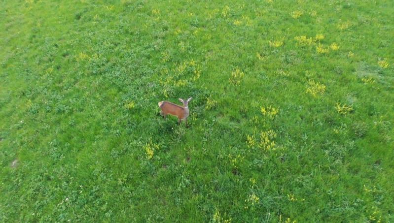 Photos depuis un drone  65043010