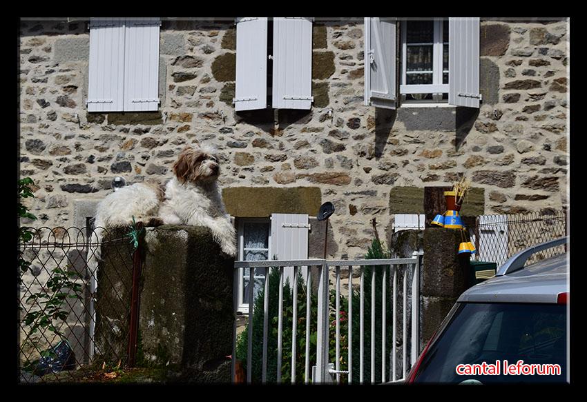"""""""Ex-pots"""" dans le bourg de Marchastel !  Dsc_1815"""