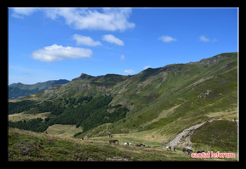 Du Puy Mary au Lioran Dsc_2614