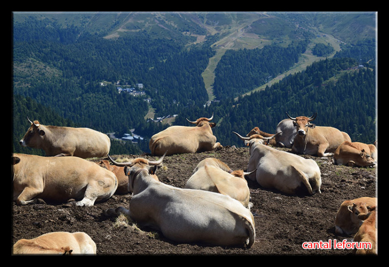 Du Puy Mary au Lioran Dsc_2710
