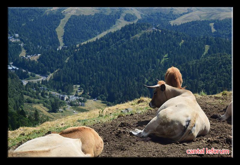Du Puy Mary au Lioran Dsc_2713