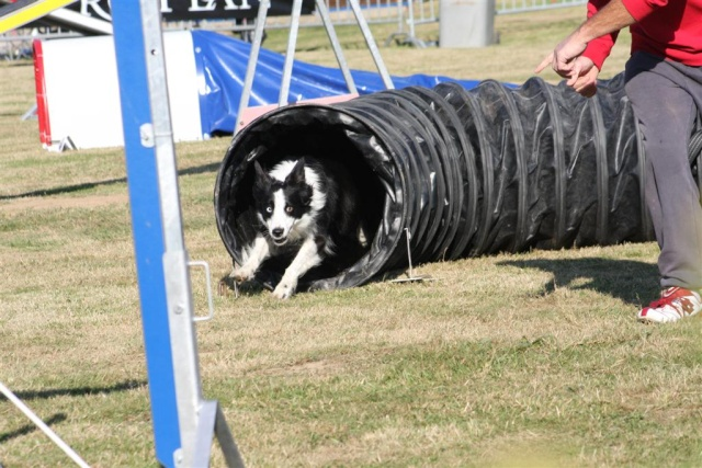 Concours photo Agility 2009: Vote final Img_0412