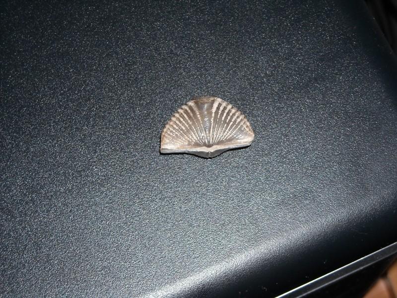 Les fossiles de Kueller Dscn0221