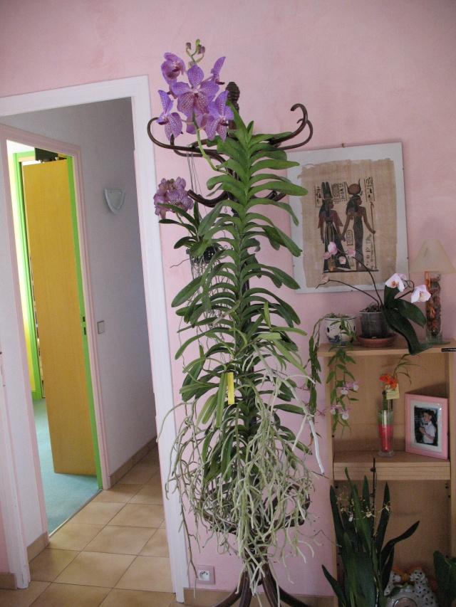 mes orchidées Img_1816