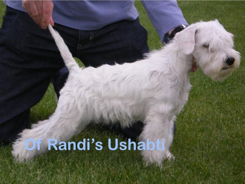 Huey Lewis of Randi's Ushabti Huey_l12
