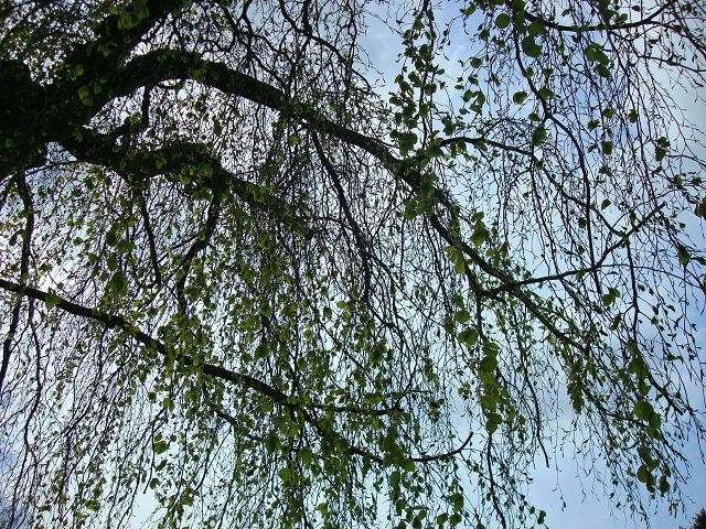 Fotoprojekt - Bäume K-dsc021
