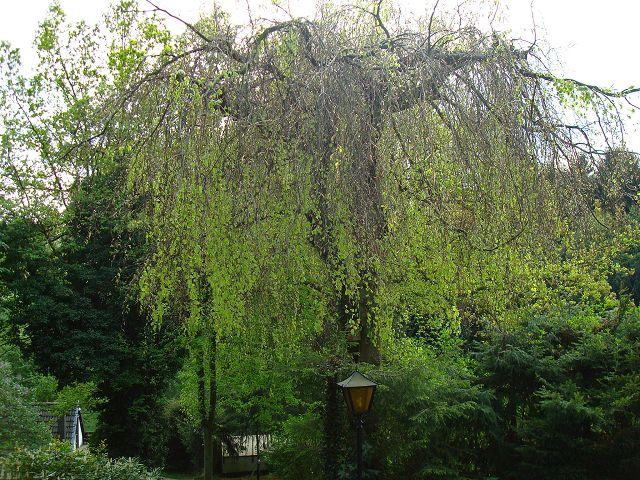 Fotoprojekt - Bäume K-dsc022