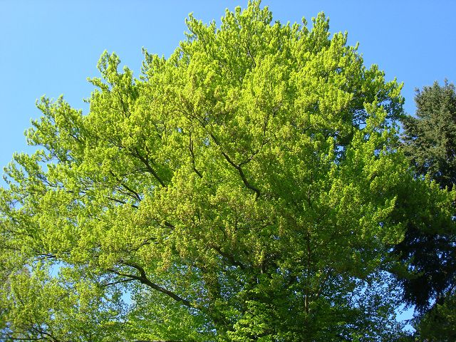 Fotoprojekt - Bäume - Seite 2 K-dsc026