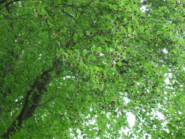 Fotoprojekt - Bäume - Seite 2 K-dsc027