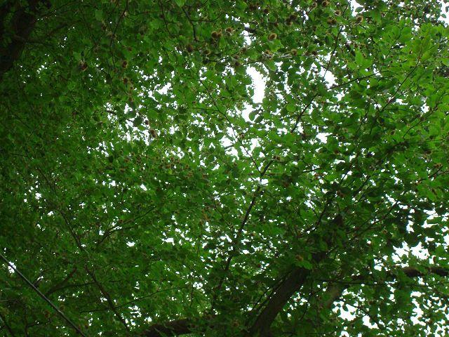Fotoprojekt - Bäume - Seite 2 K-dsc028