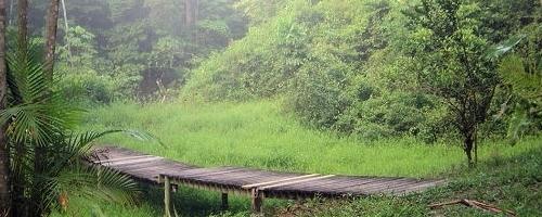 Au coeur de la forêt .:: AVENTURE ::. Sujet10